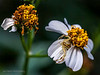 """<a href=""""http://www.photographycorner.com/forum/showthread.php?t=109003"""">Waiting - Macro</a> by <a href=""""http://www.photographycorner.com/forum/member.php?u=12688"""">jaharris1001</a>"""