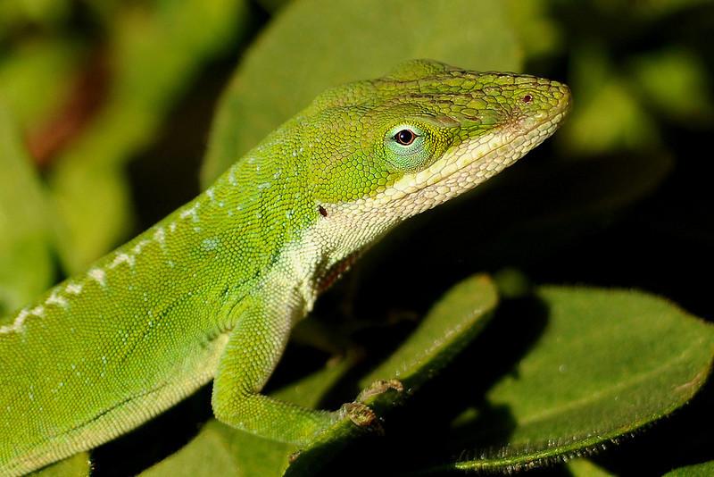 "<a href=""http://www.photographycorner.com/forum/showthread.php?t=109059"">Irish Lizard</a> by <a href=""http://www.photographycorner.com/forum/member.php?u=22146"">suci</a>"