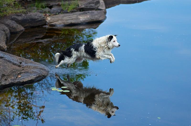 "<a href=""http://www.photographycorner.com/forum/showthread.php?t=110508"">Jump</a> by <a href=""http://www.photographycorner.com/forum/member.php?u=26105"">21limited</a>"