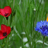 Wild Flowers. by Suci