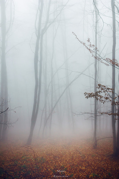 """<a href=""""http://www.photographycorner.com/forum/showthread.php?t=115223"""">Shrouded in Fog</a> by <a href=""""http://www.photographycorner.com/forum/member.php?u=30780"""">Nordi</a>"""