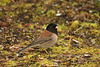 "<a href=""http://www.photographycorner.com/forum/showthread.php?t=114726"">Just a Junco</a> by <a href=""http://www.photographycorner.com/forum/member.php?u=337"">squirl033</a>"