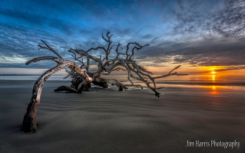 "<a href=""http://www.photographycorner.com/forum/showthread.php?t=113507"">Driftwood Beach at Jekyll Island GA</a> by <a href=""http://www.photographycorner.com/forum/member.php?u=12688"">jaharris1001</a>   <font size=""+2"">WINNER of the <a href=""http://www.photographycorner.com/photograph-of-the-month/2014/03/driftwood-beach-at-jekyll-island-ga"">February 2014 Photograph of the Month</a> contest.</font>"
