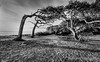 """<a href=""""http://www.photographycorner.com/forum/showthread.php?t=113693"""">Wind Blown from Jekyll Island</a> by <a href=""""http://www.photographycorner.com/forum/member.php?u=12688"""">jaharris1001</a>   <font size=""""+2"""">WINNER of the <a href=""""http://www.photographycorner.com/photograph-of-the-month/2014/03/wind-blown-from-jekyll-island"""">March 2014 Photograph of the Month</a> Contest.</font>"""