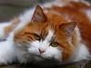 Cat by Namllihs