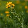 Flower shots by FilmWorld