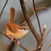 Un Pájaro Pequeño by pdmilesjr