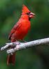 """""""Backyard Birds"""" by Suci"""