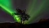 """Aurora Tree"" by Anjin_Nav"