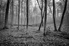 Forest by 30D