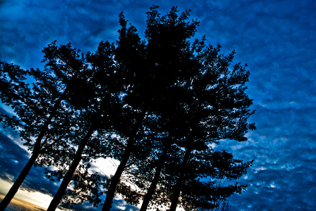DECEMBER 2012<br /> <br /> Somerville, MA<br /> <br /> There's no place like home!  I walked out my door and spent some time in my neighborhood photographing the winter sunset.  Cold as it was, I love the silhouetted trees.  I was pleased to find this patch of evergreens.  Reminding me of Christmas, I snapped this shot for December.