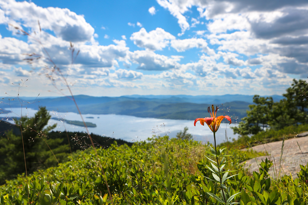 JUNE 2016<br /> <br /> Buck's Mountain<br /> Lake George Region (Adirondacks, NY)<br /> <br /> I was exploring the Adirondacks for the first time with some new friends.  It was a refreshing trip with lots of hiking, nature and wonderful people.  I took this photograph on top of Buck's mountain with a distant view of Lake George. <br /> Happy Summer!