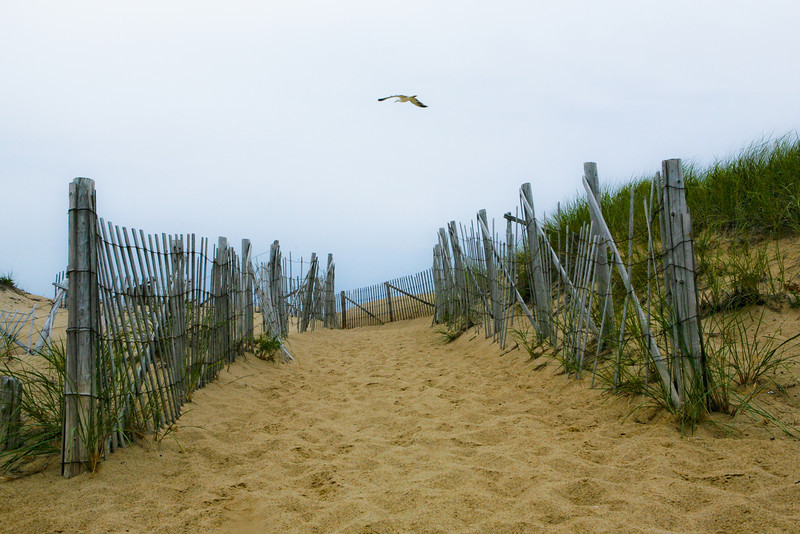 AUGUST 2010<br /> <br /> Provincetown, MA<br /> <br /> The bird seemed to be inviting me to the horizon...