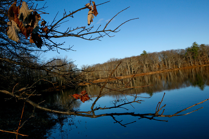 NOVEMBER 2010<br /> <br />  Wayland, MA<br /> <br /> I took this photograph at sunset. The golden sunset light shined on the few remaining leaves.  The background of bare trees reflecting in the water is a sure sign of winter...