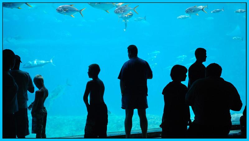 "Visitors by <a href=""http://www.photographycorner.com/forum/member.php?u=6994"">Frikfoto</a>"