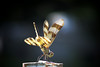 "Dance of the Dragon Fly by <a href=""http://www.photographycorner.com/forum/member.php?u=8978"">conke1999</a>"