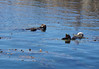 "Sea Otters by <a href=""http://www.photographycorner.com/forum/member.php?u=7749"">Terri's Weekend Photos</a>"