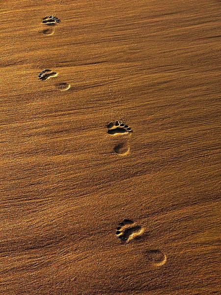 "Golden Sands by <a href=""http://www.photographycorner.com/forum/member.php?u=2752"">alyeska41</a>"