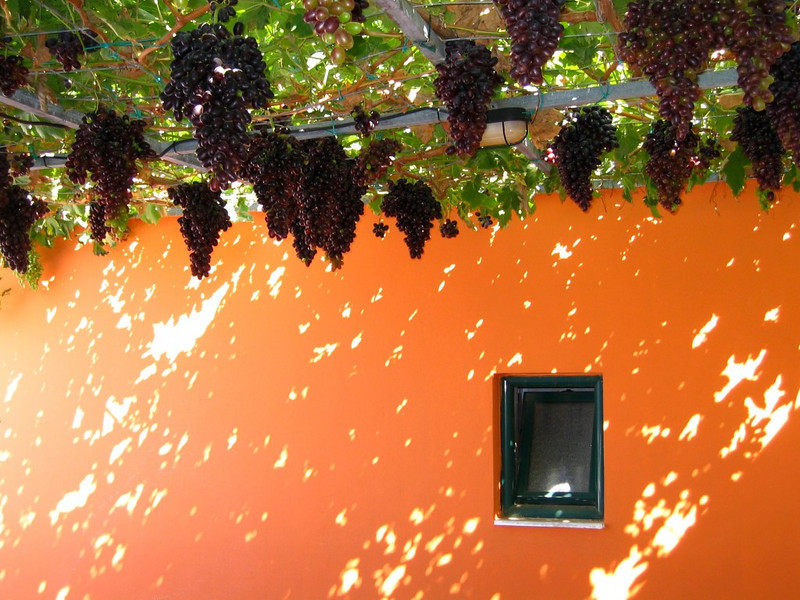 "Under the Grapes by <a href=""http://www.photographycorner.com/forum/member.php?u=8974"">markop</a>"