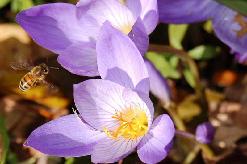 "The Bee by <a href=""http://www.photographycorner.com/forum/member.php?u=8333"">vamom7678</a>"