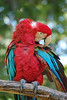 "Polly by <a href=""http://www.photographycorner.com/forum/member.php?u=376"">Jay</a>"