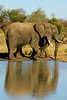 "Safari by <a href=""http://www.photographycorner.com/forum/member.php?u=8813"">Capture</a> Gal"