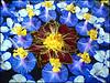 "Flower Arrangement by <a href=""http://www.photographycorner.com/forum/member.php?u=8351"">nishanthpaul</a>"