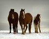 "The Three by <a href=""http://www.photographycorner.com/forum/member.php?u=8935"">PicturePony</a>"