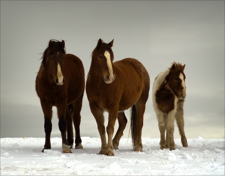 """Round 1, Group N Co-Winner The Three by <a href=""""http://www.photographycorner.com/forum/member.php?u=8935"""">PicturePony</a>"""