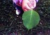 "Little Hands, Big World by <a href=""http://www.photographycorner.com/forum/member.php?u=11366"">KaylaYates</a>"