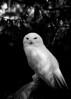 "Snowy Wisdom by <a href=""http://www.photographycorner.com/forum/member.php?u=10561"">quark</a>"