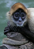 """Afternoon Siesta at Spider Monkey Island by <a href=""""http://www.photographycorner.com/forum/member.php?u=3181"""">mhhurst</a>"""