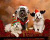 "Santa Dog and his Elves by <a href=""http://www.photographycorner.com/forum/member.php?u=9098"">jtaylor1120</a>"