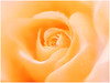 """Aroma Of Love by <a href=""""http://www.photographycorner.com/forum/member.php?u=8938"""">bnilesh</a>"""