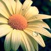 "Bron-Y-Aur Stomps by <a href=""http://www.photographycorner.com/forum/member.php?u=7001"">CAB</a>"