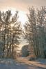 "Winter Lane by <a href=""http://www.photographycorner.com/forum/member.php?u=11192"">sfaryna</a>"
