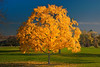 """Golden Autumn by <a href=""""http://www.photographycorner.com/forum/member.php?u=13337"""">joethedestroyer</a>   Check out the <a href=""""http://www.photographycorner.com/forum/showthread.php?t=81068"""">final voting results for Round 1, Group B</a> of the <a href=""""http://www.photographycorner.com/2008-photograph-of-the-year"""">2008 Photograph of the Year Contest</a> to find out where this photograph placed.  Also make sure to check out the <b><a href=""""http://photographycorner.smugmug.com/gallery/7169189_ALAW4"""">top 20 finalists</a></b> from the <a href=""""http://www.photographycorner.com/2008-photograph-of-the-year"""">PhotographyCorner.com 2008 Photograph of the Year</a> contest!"""