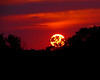 "Burning Sunset Silhouette by <a href=""http://www.photographycorner.com/forum/member.php?u=13072"">shelbel64</a>   Check out the <a href=""http://www.photographycorner.com/forum/showthread.php?t=81076"">final voting results for Round 1, Group J</a> of the <a href=""http://www.photographycorner.com/2008-photograph-of-the-year"">2008 Photograph of the Year Contest</a> to find out where this photograph placed.  Also make sure to check out the <b><a href=""http://photographycorner.smugmug.com/gallery/7169189_ALAW4"">top 20 finalists</a></b> from the <a href=""http://www.photographycorner.com/2008-photograph-of-the-year"">PhotographyCorner.com 2008 Photograph of the Year</a> contest!"