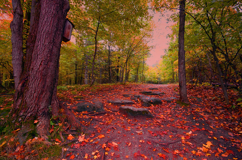 "Trail Through an Autumn Wood by <a href=""http://www.photographycorner.com/forum/member.php?u=10628"">Nikon_Mario</a>   Check out the <a href=""http://www.photographycorner.com/forum/showthread.php?t=81072"">final voting results for Round 1, Group F</a> of the <a href=""http://www.photographycorner.com/2008-photograph-of-the-year"">2008 Photograph of the Year Contest</a> to find out where this photograph placed.  Also make sure to check out the <b><a href=""http://photographycorner.smugmug.com/gallery/7169189_ALAW4"">top 20 finalists</a></b> from the <a href=""http://www.photographycorner.com/2008-photograph-of-the-year"">PhotographyCorner.com 2008 Photograph of the Year</a> contest!"
