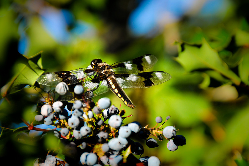 """Dragonfly by <a href=""""http://www.photographycorner.com/forum/member.php?u=11063"""">BrokenPerfection</a>   Check out the <a href=""""http://www.photographycorner.com/forum/showthread.php?t=81070"""">final voting results for Round 1, Group D</a> of the <a href=""""http://www.photographycorner.com/2008-photograph-of-the-year"""">2008 Photograph of the Year Contest</a> to find out where this photograph placed.  Also make sure to check out the <b><a href=""""http://photographycorner.smugmug.com/gallery/7169189_ALAW4"""">top 20 finalists</a></b> from the <a href=""""http://www.photographycorner.com/2008-photograph-of-the-year"""">PhotographyCorner.com 2008 Photograph of the Year</a> contest!"""