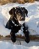 "Snow Ball Retriever by <a href=""http://www.photographycorner.com/forum/member.php?u=2004"">JustJerk</a>"