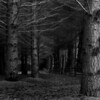 """Enchanted Forest by <a href=""""http://www.photographycorner.com/forum/member.php?u=10422"""">tamara</a>"""