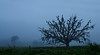 "The Dead Oak by <a href=""http://www.photographycorner.com/forum/member.php?u=7926"">bugsman</a>"