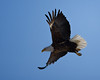 """Bald Eagle by wtlwdwgn  <a href=""""http://www.photographycorner.com/forum/showthread.php?t=96302"""">See the Round 1 Voting Results here</a>"""