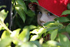 "Hide n Seek by B Chase  <a href=""http://www.photographycorner.com/forum/showthread.php?t=96306"">See the Round 1 Voting Results here</a>"