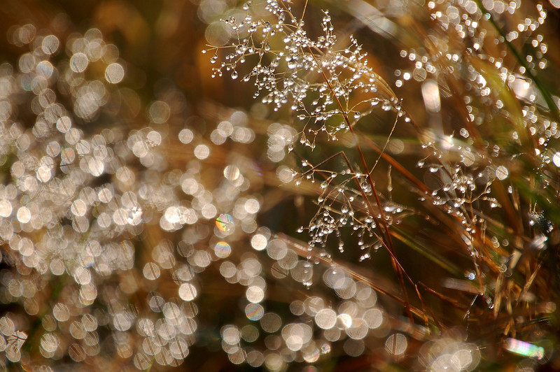 "Diamond Dew   <font size=""+1""><a href=""http://www.photographycorner.com/forum/showthread.php?t=102807"">See the voting results HERE!</a></font>"