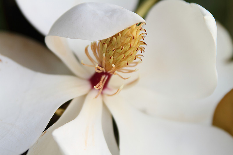 "Magnolia   <font size=""+1""><a href=""http://www.photographycorner.com/forum/showthread.php?t=102807"">See the voting results HERE!</a></font>"