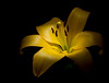 """Lily   <font size=""""+1""""><a href=""""http://www.photographycorner.com/forum/showthread.php?t=102810"""">See the voting results HERE!</a></font>"""