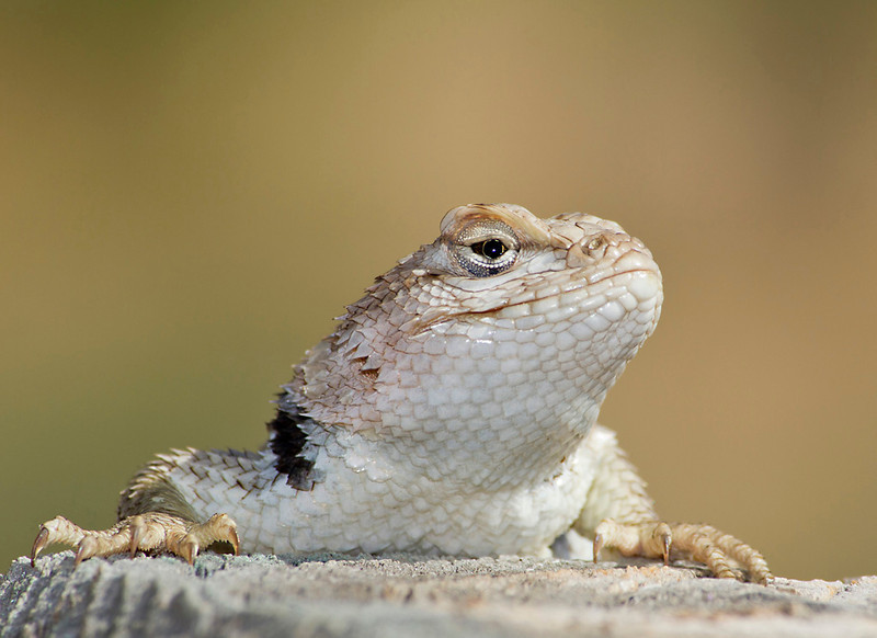 "Posing Lizard   <font size=""+1""><a href=""http://www.photographycorner.com/forum/showthread.php?t=102812"">See the voting results HERE!</a></font>"