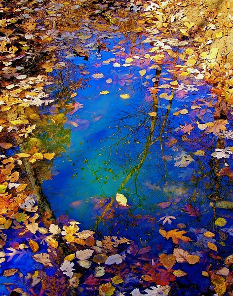 """The Circle of Seasons   <font size=""""+1""""><a href=""""http://www.photographycorner.com/forum/showthread.php?t=102812"""">See the voting results HERE!</a></font>"""